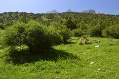 Montagne nella gola di Galuyan, Kirghizistan Immagine Stock