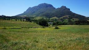 Montagne nella regione del vino di Stellenbosch, fuori di Cape Town, Sou Immagini Stock