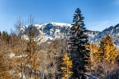 Montagne nevose bianche di inverno e conifere verdi Fotografie Stock Libere da Diritti