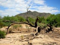 Montagne noire, insouciante, AZ photos stock