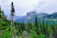 Montagne in nuvole ed alta foresta alpina della conifera in Glacier National Park Fotografia Stock