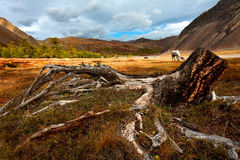 Montagne, prato, legno, albero Fotografia Stock Libera da Diritti
