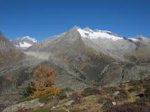 Montagne ricoperte neve e larice giallo Fotografia Stock