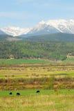 Montagne rocciose ed aziende agricole immagini stock libere da diritti