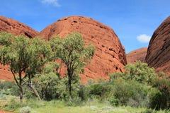 Montagne rosse del rck con gli alberi Fotografia Stock Libera da Diritti