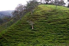 Montagne in San Jose, Costa Rica Fotografia Stock
