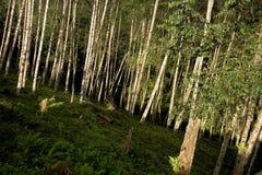 Montagne in San Jose, Costa Rica Fotografia Stock Libera da Diritti