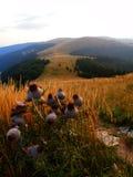 Montagne slovacche di Tatra Immagini Stock