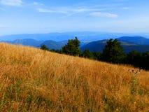 Montagne slovacche di Tatra Fotografia Stock