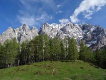 Montagne in Slovenia Immagini Stock