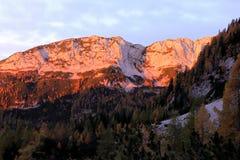 Montagne soleggiate di mattina con gli alberi di larice nella parte anteriore Fotografia Stock