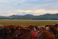 Montagne sui Horsebacks Immagini Stock