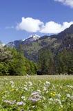 Montagne suisse d'Alpes Images stock