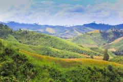 Montagne verdi Fotografie Stock