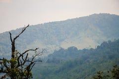 Montagne verdi Fotografia Stock