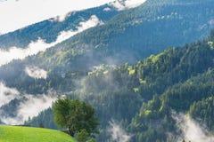 Montagne verdi della foresta nella mattina nebbiosa Immagine Stock Libera da Diritti