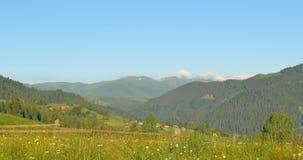 Montagne verdi soleggiate Prato delle colline e del cielo blu panning Foresta nelle montagne Bei pini di panorama sul archivi video