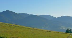 Montagne verdi soleggiate Prato delle colline e del cielo blu panning Foresta nelle montagne Bei pini di panorama sul stock footage