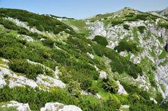 Montagne verdi vibranti Immagini Stock