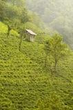 Montagne verte Photos libres de droits
