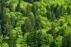 Montagne verte d'arbres forestiers photo stock