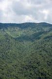 Montagne verte de couverture d'arbres Photographie stock