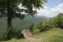 Montagne verte de couverture d'arbres Images libres de droits