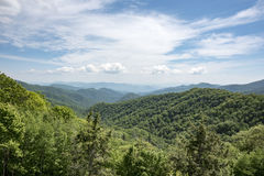 Montagne verte de couverture d'arbres Images stock