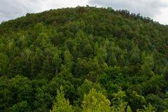 Montagne verte de forêt à l'été nuageux Horizontal de nature Photo stock