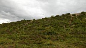 Montagne verte et belle en Finlande Images libres de droits