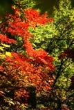Montagnes 05 de Guanmenshan Photographie stock libre de droits