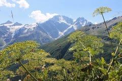Montagnes Image stock