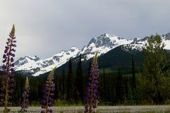 Montagnes aléatoires Photos stock