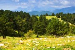 Montagnes avec des pins Pyrénées, Catalogne Image libre de droits