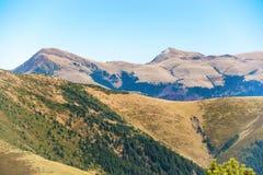 Montagnes avec l'herbe et la forêt Images stock