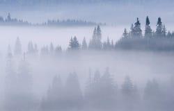 montagnes brumeuses de forêt carpathienne Image libre de droits
