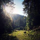 Montagnes carpathiennes d'été de faune image stock