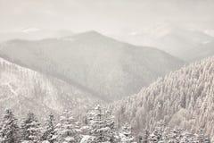 Montagnes carpathiennes de bel hiver Photos libres de droits
