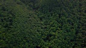Montagnes carpathiennes de forêt verte aérienne banque de vidéos