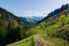 Montagnes carpathiennes de paysage Photos stock