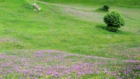 Montagnes colorées du Caucase en Géorgie Photographie stock libre de droits
