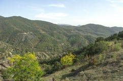 Montagnes couvertes de forêt en automne Photographie stock libre de droits