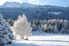 Montagnes couvertes de neige Photo libre de droits