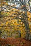 Montagnes criméennes Photo libre de droits