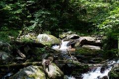 Montagnes débordantes de rivière Photos stock