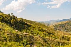 Montagnes décimées de déboisement photos libres de droits