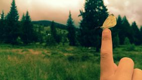Montagnes d'Apuseni Photographie stock libre de droits