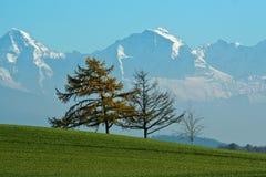 Montagnes d'arbres d'automne Image libre de droits