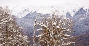 Montagnes dans la station de vacances de Sotchi photographie stock libre de droits