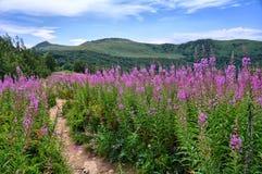 Montagnes de Bieszczady Image libre de droits